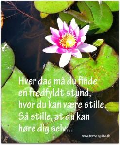 Hver dag må du finde en rolig stund... TrivselsGuide.dk