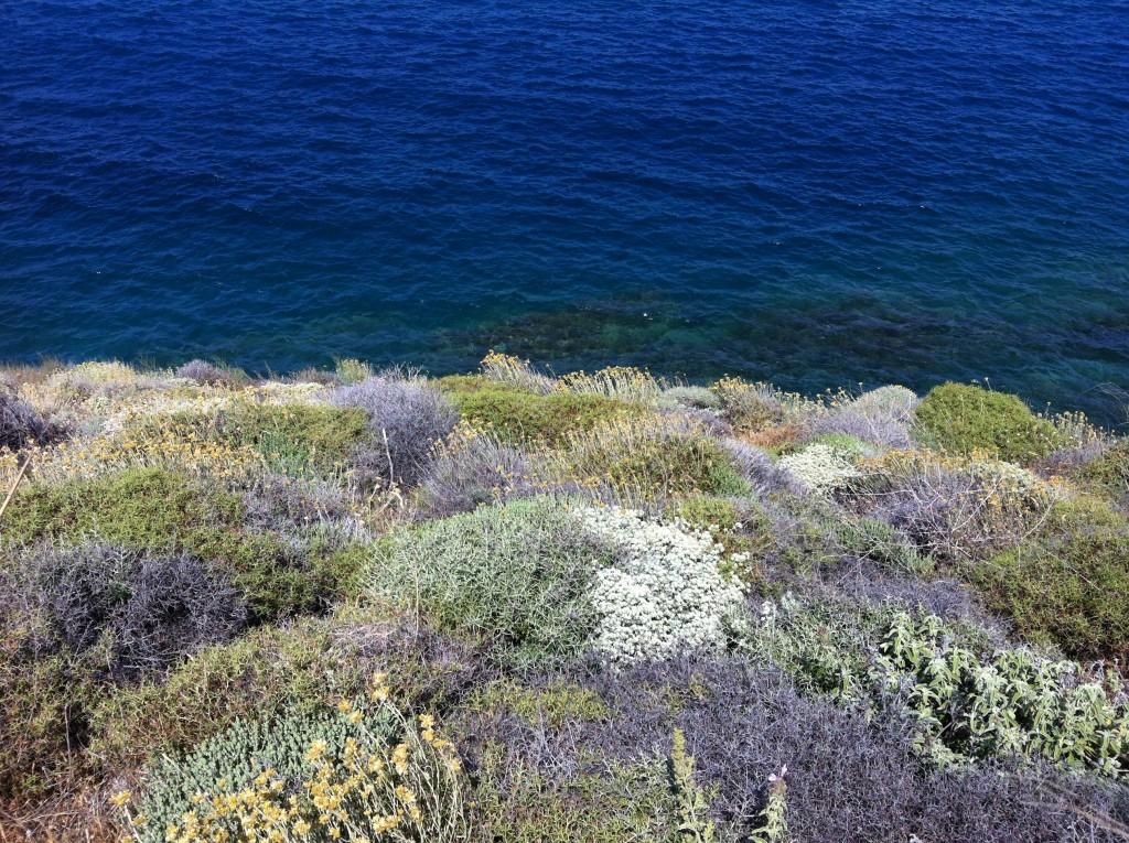 Alenetid på Syros - TrivselsGuide.dk